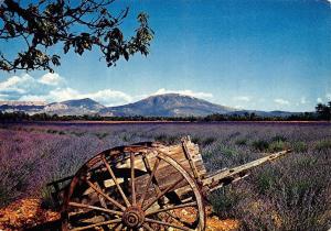 France Sous le beau ciel de Provence Champ de lavande
