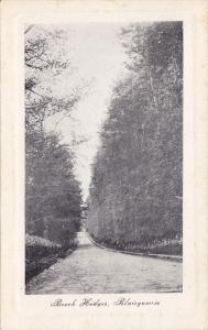 Beech Hedges, Blairgowrie, Scotland, UK, 1910-1920s