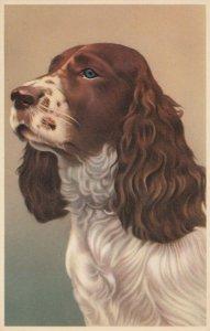 DOG ; Cocker , 1930s