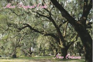 Louisiana New Orleans City Park Moss Draped Oaks