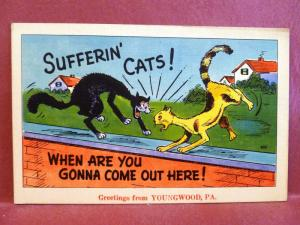 Postcard PA Youngwood Comic Greetings from Youngwood Sufferin Cats