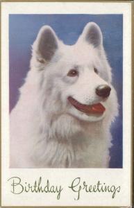 Birthday Greetings dog Hund chien ETW Dennis & Sons