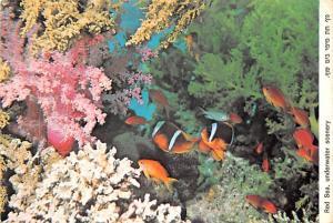 Israel Read Sea Underwater Scenery  Read Sea Underwater Scenery