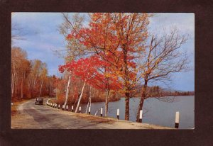 MA Greetings From Lynnfield Center Mass Massachusetts Postcard Road Trees