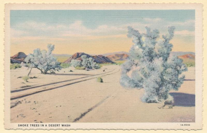Smoke Trees in a Desert Wash - Southwest United States - Linen