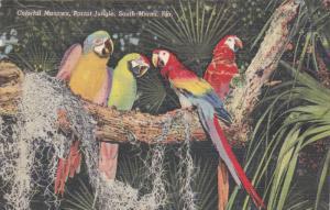 Parrot Jungle , MIAMI , Florida , 30-40s