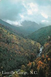 Wilderness Area Linville Gorge North Carolina
