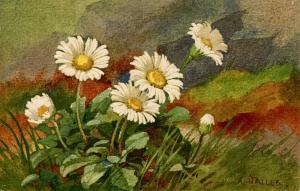 Daisies - Artist: A. Haller
