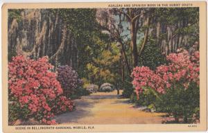 Azaleas and Spanish Moss, Bellingrath Gardens, Mobile, Alabama, linen Postcard