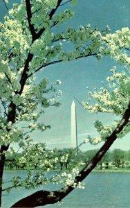 Washington D C Washington Monument At Cherry Blossom Time