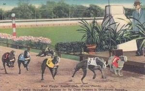 Florida Miami City West Flagler Kennel Club Is Noted Throughout America For I...
