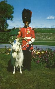 Royal Goat - Mascot of Regiment - La Citadelle QC, Quebec, Canada