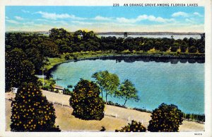 [ American Art ] US Florida - An Orange Grove Among Florida Lakes