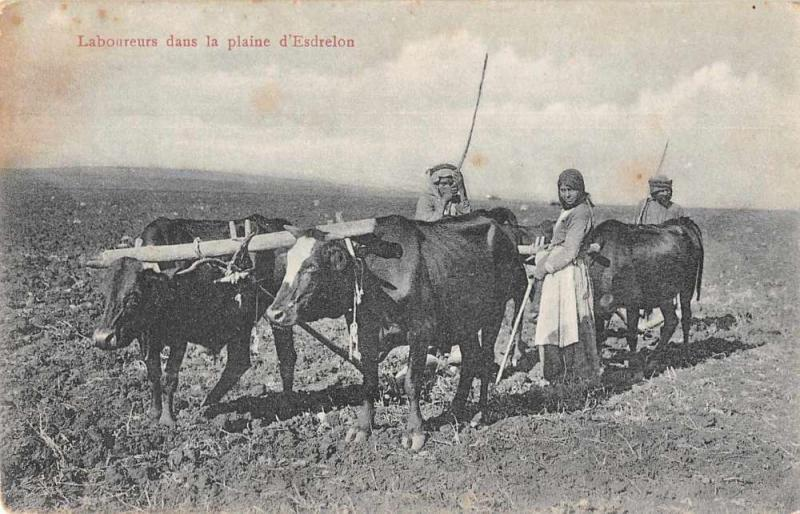 Esdrelon Israel Jezreel Valley Farmers Ox Plows Postcard JA4741947