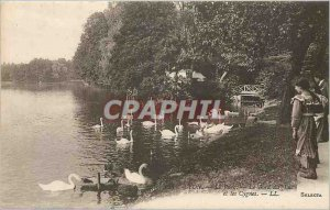 Old Postcard Lyon Park The Lakeshore and Swans