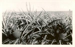 HI - Oahu. Pineapple Plantation     *RPPC