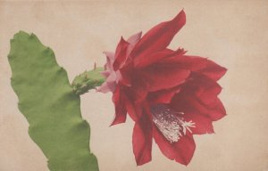 RP: Cactus Flower , 00-10s