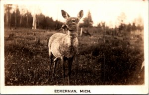 Eckerman MI Fawn baby deer in field woods cute vintage postcard