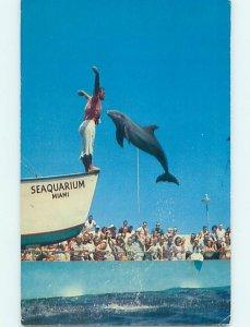 Pre-1980 SEAQUARIUM SCENE Miami Florida FL AF9456