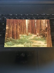 Vintage postcard - Redwood Forests, Northern California