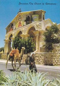 Jerusalem, The Church of Gethsemane, Man walking his camel, Israel, PU-1977