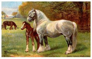 Horse   ,Cart Mare and Foal
