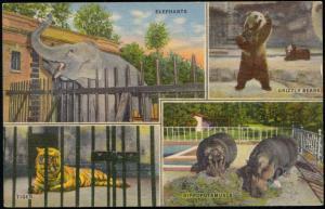Memphis ZOO, Elephant, Grizzly Bear, Tiger, Hippo Hippopotamus, Multiview (1940)
