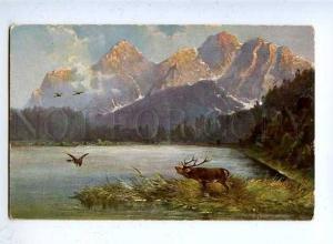 182858 Hunting for ducks deer summer Muller vintage postcard