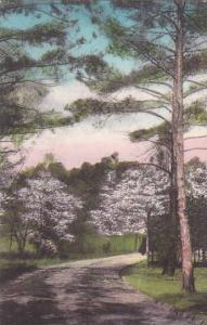 North Carolina Southern Pines Greetings From Southern Pines Albertype