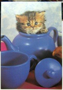 Postcard Cat Kitten in a Teapot - unposted