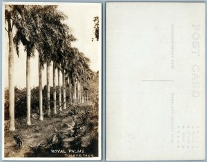 PUERTO RICO ROYAL PALMS PORTO RICO VINTAGE REAL PHOTO POSTCARD RPPC
