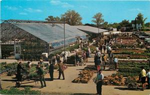 Westland Michigan~Clyde Smith & Sons Greenhouse~Certified Farm Market~1960s PC