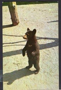 Ontario BEARDMORE Where is my Dinner?, Bear Cub - Del Mar Restaurant 1950s-1970s