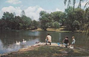 Feeding Swans at City Park Lake - Hagerstown MD, Maryland - pm 1978