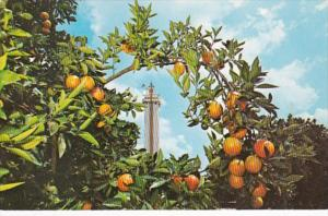 Florida Clermont The Citrus Tower 1969