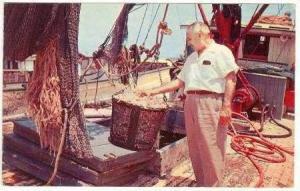 Pink Jumbo Shrimp Unloaded, Tampa, Florida, 50-60s