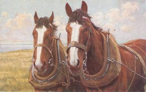 Two heavy horses Old vintage English postcard