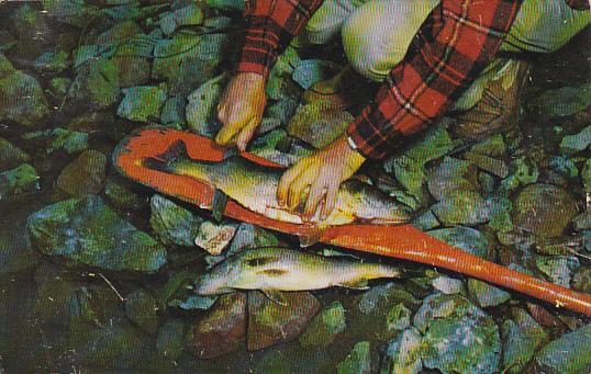 Fisherman's Delight Man Fileting Fish