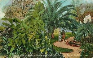 California Cawston Ostrich Farm Tropical Gardens Mitchell 1914 Postcard 21-5998