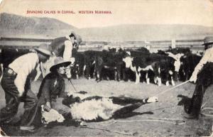Western Nebraska cowboys branding calves in corral antique pc Y12950