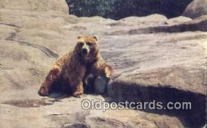 Chicago Zoo Brookfield, Ill Bear Postcard Bear Post Card Old Vintage Antique ...