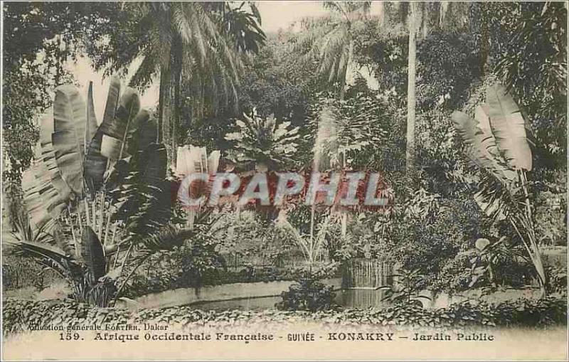 Vintage Postcard Guinea Konakry Africa Western French Park
