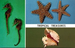 Florida Tropical Treasures Seahorse Starfish and Conch