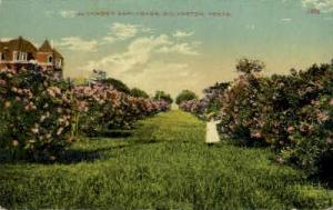 Oleander Esplanade Galveston TX Unused