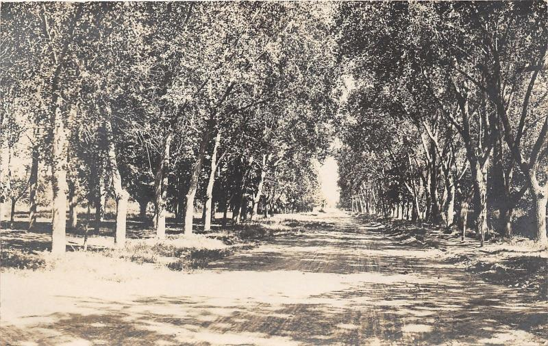 Rocky Ford Colorado?~Unpaved Street surrounded by Trees~Otero County~1908 RPPC
