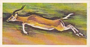 Brooke Bond Vintage Trade Card Wonders Of Wildlife 1976 No 5 Impala Jumping E...
