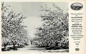 Apple Orchard at Blossom Time Columbia Basin Wenatchee WA RP