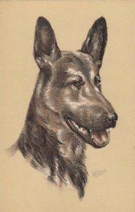 AS: Portrait of Alsatian (German Sheppard) Dog, 1900-10s