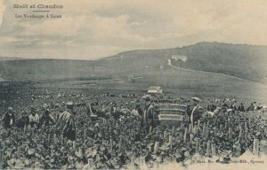 MOET & CHANDON , France, 1900-10s ; Champagne Production #8