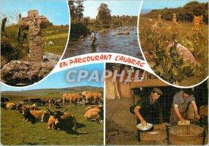 Postcard Modern Traveling Aubrac Cows